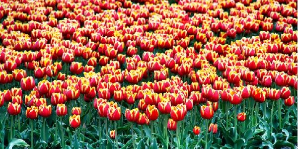 Доставка на цветя – нуждаем ли се от тази услуга?